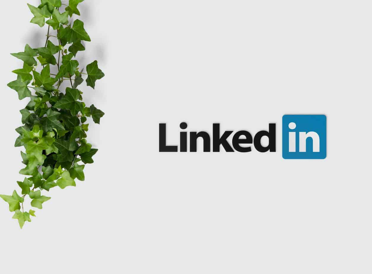 The Value of the LinkedIn Feed you should know!